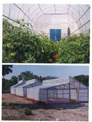 uv-stabalized-films-for-greenhouse-250x250